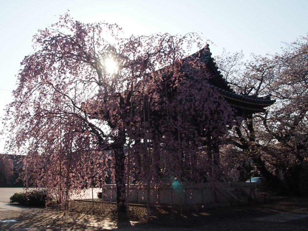 諏訪山吉祥寺の朝寺