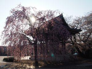 【東京の朝寺】日常が非日常に変わる朝のお寺参りのススメ