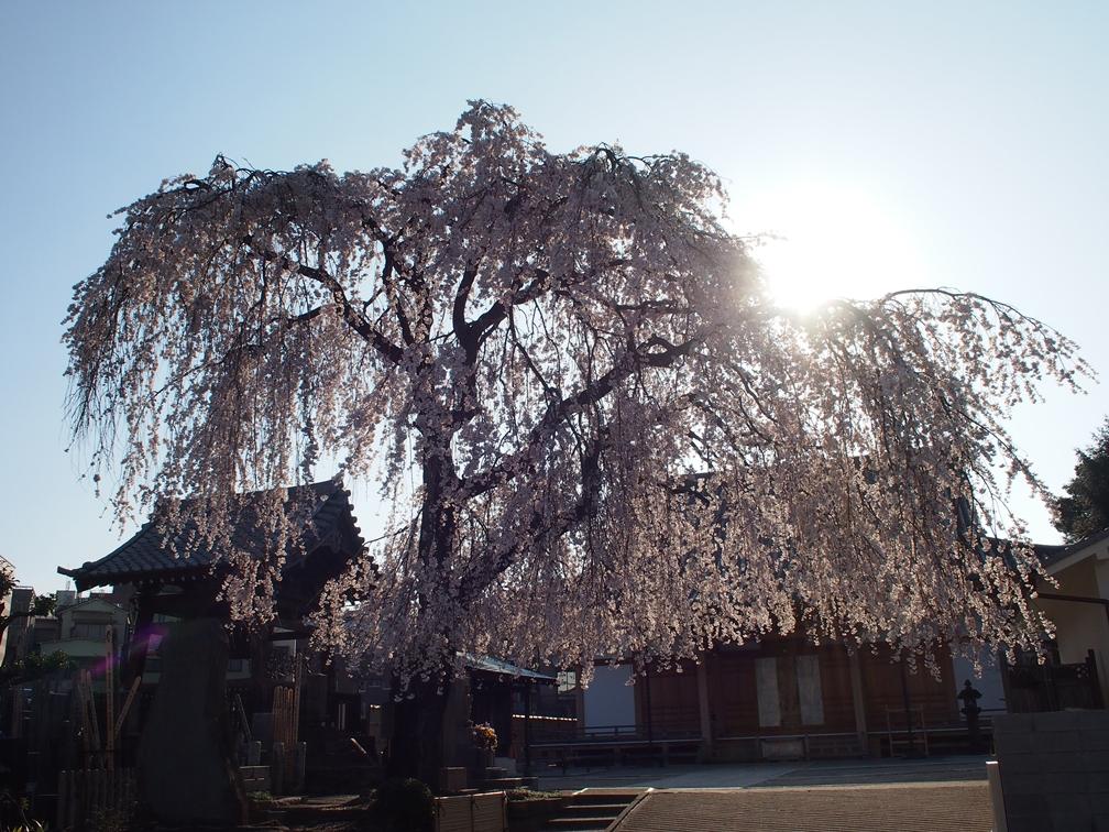 谷中界隈のお寺(台東区)