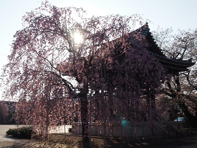 諏訪山吉祥寺(文京区本駒)