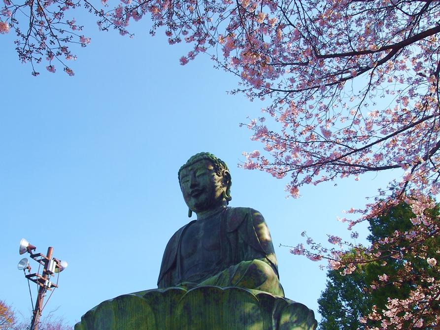 神齢山悉地院大聖護国寺(文京区)