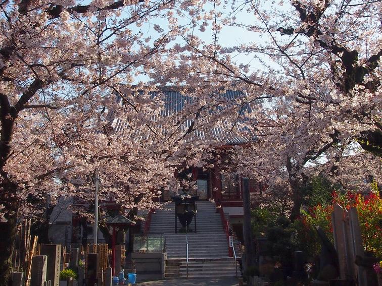 湯嶋山浄心寺(文京区)